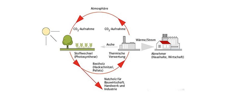 EAM Bioenergie Kreislauf Biomasse